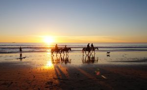 Horses walking gracefully along a beach.